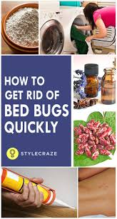 How To Kill Bed Bugs At Home Best 25 Bed Bugs Treatment Ideas On Pinterest Bed Bug Control