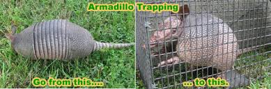 How Do You Get Rid Of Skunks In Your Backyard How To Get Rid Of Armadillos In The Yard Lawn Or Garden Digging