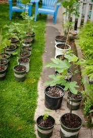 flatbush fig farm