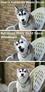 funny dog memes apple store no windows funny dog top