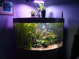 good aquarium decorations design http monpts com some