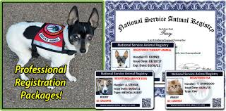 Comfort Dog Certificate National Service Animal Registry Helping Animals Help People