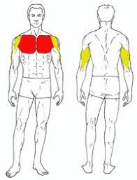 decline bench press muscles decline bench press gymjp com