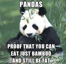 Cutest Memes - 15 cutest panda memes which ruled the internet viral slacker