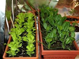 growing vegetables in containers gardening ideas