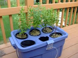 start a hydroponic garden tips for beginners