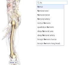 Google Human Anatomy Google Body Browser
