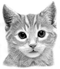 best 25 pencil drawings of animals ideas on pinterest owl