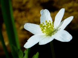 spring flower white and green flower in macro shot photography free stock photo