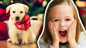 top 5 who got a puppy for present reactions w