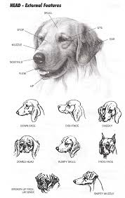 Dog Stifle Anatomy Canadian Professional Pet Stylists The Only Federally Registered
