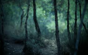images forest hd wallpaper collections sc