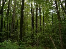 Maryland forest images Cedarville state forest waldorf md bill hensley 39 s random blog jpg