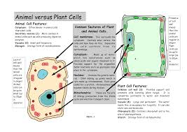 animal cell diagram part 18