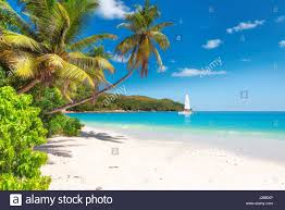 tropical ocean beach with white sand coconut palm trees