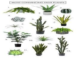 best house plants good house plants best houseplants download by best houseplants
