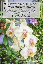 146 best orchids images on pinterest orchid care growing