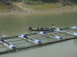 fish farming in bangladesh cage aquaculture inclusive business hub