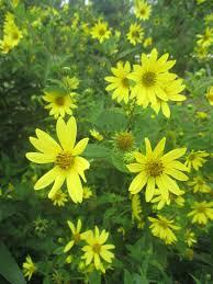 Sunken Gardens Family Membership Plant Sale Teaser Rotary Botanical Gardens