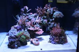 Aquascape Reef Struggling To Aquascape Im 10 Aquascaping Forum Nano Reef Com