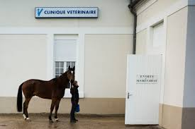 bureau secretariat an equine paradise correspondent