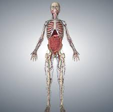 Online Human Body Play With Yourself Online To Check Your Own Health Healthy Check