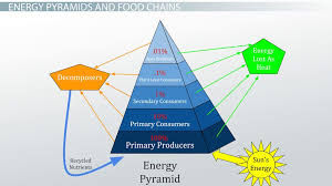 the 10 energy rule in a food chain video u0026 lesson transcript