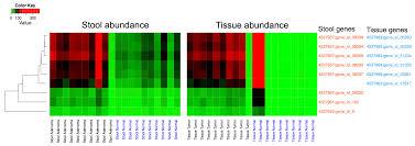 tartan vs plaid genes free full text a microbiomic analysis in african