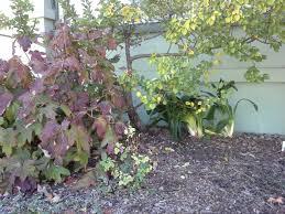 seasonal gardening u2013 california native 100 tree of forty fruits certified organic sustainable