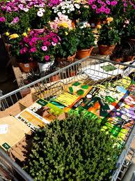 flower gardening 101 gardening 101 planting seedlings little green kettle