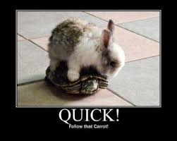 Funny Bunny Memes - funny rabbit memes the best rabbit of 2018