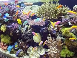 Marine Aquascaping Techniques Freshwater And Marine Aquarium