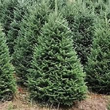 real trees you ll wayfair