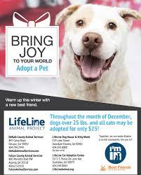 black friday pet adoption give joy holiday pet adoption promotion adopt don u0027t shop