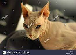 evil cat stock photo royalty free image 124325585 alamy