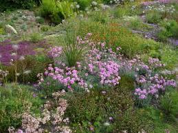 7 best naturalistic garden design images on pinterest devon