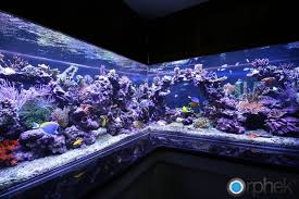 led lights for coral tanks let s talk low energy reef tanks the reef tank