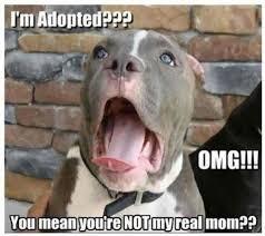 Funny Animal Meme - im adopted funny cute memes animals dogs dog animal meme lol humor