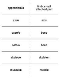 awesome medical terminology worksheets ladyk pinterest