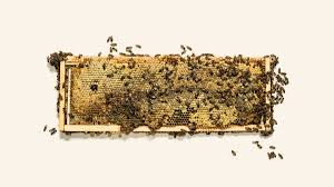 save the one scientist s bet to save the bees join monsanto wired