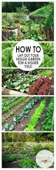 starting a vegetable garden general care articles gardening know