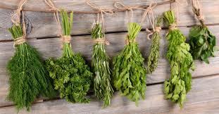 les herbes de cuisine peut on congeler ses herbes aromatiques fourchette