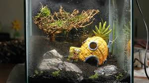 Aquascape Tree Aquascape Kidsscape Do Aqua Cube With Moss Tree Youtube