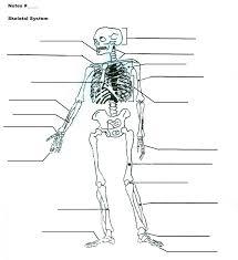 Calculating Molar Mass Worksheet Skeletal System Diagram Worksheet Worksheets For Dropwin