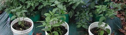 pepper garden sat sun 21 u201322 jun 2008