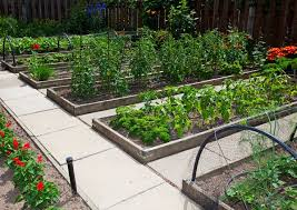 vegetable garden design raised beds completure co