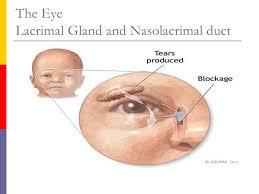Eye Ducts Anatomy Head And Neck Head U0026 Eye The Head Anatomy The External Eye
