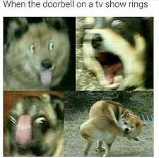 Meme Shiba Inu - when the doorbell on a tv show rings funny memes daily lol pics