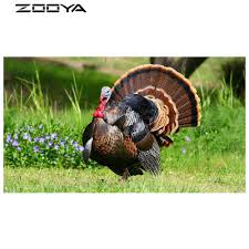 online get cheap animated turkey pictures aliexpress com