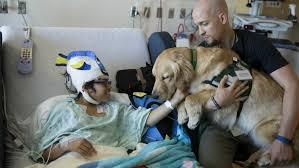 Comfort Pet Certification New Hospital Service Dogs At C S Mott Children U0027s Hospital